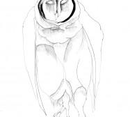 Eulen 9 | 42 x 30 cm | Tusche auf Papier | 2019